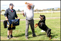 Central Rottweiler Club - New Zealand